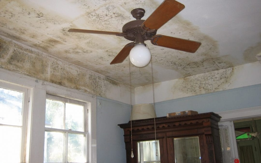 Environmental Hazards to Your Home
